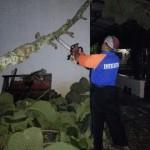 ANGIN KENCANG WONOGIRI : Pohon Tumbang Timpa Sekolah di Selogiri
