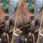 Nelayan Rusia mengangkat jala ikan yang ternyata berisi anjing laut. (Istimewa/Youtube)