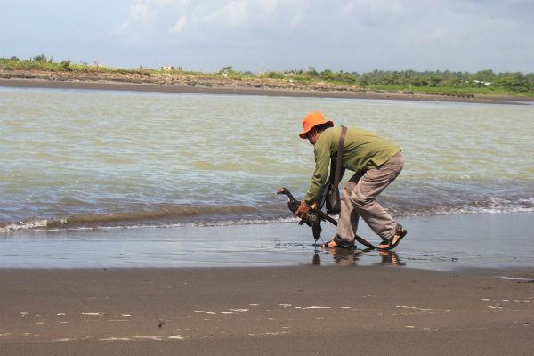 Buaya muara yang dikabarkan nyasar hingga ke tepi pantai dipancing dengan itik di Pantai Congot, Jangkaran, Temon pada Sabtu (24/12/2016). (Sekar Langit Nariswari/JIBI/Harian Jogja)