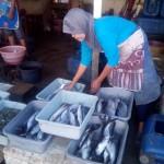Harga Ikan Laut Naik Tajam