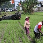 KECELAKAAN KLATEN : Ada Mobil Terjun ke Sawahnya, Petani Ini Tetap Lanjut Kerja