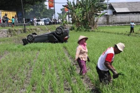Tukul dan Suwarni tetap mencabuti rumput di sela tanaman padi milik mereka meski ada mobil Toyota Yaris yang terguling di lahan mereka, Minggu (25/12/2016). (Taufiq Sidik Prakoso/JIBI/Solopos)