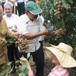 PERTANIAN KULONPROGO : Kelengkeng Potensi Agrowisata Kalibawang