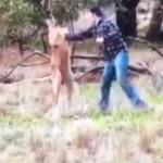 Pria Australia pukuli kanguru (Facebook/Okezone)