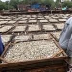 FOTO INFO BELANJA : Harga Ikan Asin di Demak Melonjak