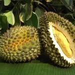 Ilustrasi buah durian (yearofthedurian.com)