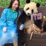 Panda pintar swafoto seolah-olah ingin memegang tongkat swafoto (Giant Panda Channel)