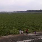 PERTANIAN BOYOLALI : BBWSBS Butuh Rp2 Miliar untuk Babat Eceng Gondok di Waduk Cengklik