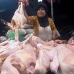 FOTO HARGA KEBUTUHAN POKOK : Sudah Sepekan, Harga Ayam Naik…