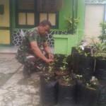 Anggota Koramil Sukorejo Ponorogo Tanam Cabai di Pekarangan