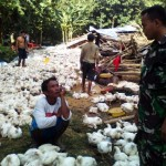 BENCANA SRAGEN : Kandang Ambruk, 2.500 Ekor Ayam Mati