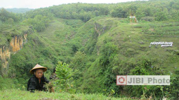 Seorang warga sedang mencari rumput di sekitar Lembah Ngringrong, atau Lembah Karst Mulo di Desa Mulo, Kecamatan Wonosari, Gunungkidul. Selasa (21/2/2017) (Irwan A. Syambudi/JIBI/Harian Jogja)