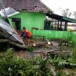 ANGIN KENCANG KLATEN : Pepohonan di Cawas Tumbang