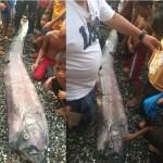 Ikan laut dalam terdampar di pantai dianggap penanda akan terjadi bencana. (Istimewa/Facebook)