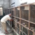 Dukuh Nglebak Klaten Kini Moncer Jadi Kampung Jalak Suren