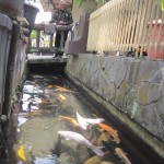 Joko Sucipto, warga Pluneng, Klaten, pembuat selokan air menjadi rumah koi dan aneka ikan lainnya. (Ponco Suseno/JIBI/Solopos)