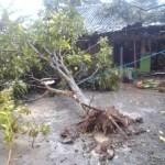 BERITA FOTO : Rumah Warga Baturan Karanganyar Tertimpa Pohon Tumbang