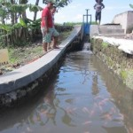 KISAH INSPIRATIF : 9 Pemuda Sidowayah Tiru Warga Pluneng Sulap Selokan Jadi Kolam Ikan Koi