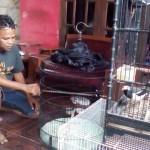 PENCURIAN KLATEN : Aksi Pencuri Burung Murai Batu di Ngawen Terekam Kamera CCTV