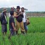 PERTANIAN JATENG : Gubernur Ganjar Minta Teknologi Pascapanen Sesuai Kebutuhan