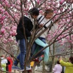 Perilaku turis domestik Tiongkok di tempat umum. (Istimewa/Weibo/Nextshark)