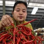 FOTO HARTA KEBUTUHAN POKOK : Cabai di Semarang Naik Rp4.000/kg