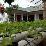 PERTANIAN GUNUNGKIDUL : Warga Wonosari Dilatih Bertanam secara Hidroponik
