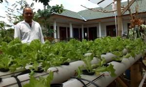 Salah seorang penyuluh pertanian, Tugimin saat berada di halaman Kantor Badan Penyuluhan Pertanian Kecamatan Wonosari yang dipenuhi selada air yang ditanam dengan metode hidroponik, Minggu (26/3/2017). (JIBI/Irwan A. Syambudi)