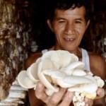 FOTO PERTANIAN SEMARANG : Jamur Tiram Diproduksi di Kaliwungu