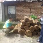 PENCURIAN PONOROGO : Curi Pohon di Hutan Sawoo, Pria Ini Ditangkap Polisi