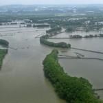 Separuh Mangrove Indonesia Kurang Baik, Kondisimya Terus Menurun…