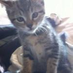 Kucing lucu milik Olga yang kini sudah lebih besar. (Istimewa/Facebook)