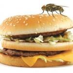 Buang Makanan Anda setelah Dihinggapi Lalat! Ini Alasannya…