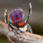Peneliti Australia Temukan 50 Spesies Baru Laba-Laba