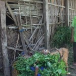 Samitun, 86, nenek yang hidup bersama tiga ekor kambingnya memberi makan seekor kambingnya di depan rumah, Jumat (21/4/2017). (Abdul Jalil/JIBI/Madiunpos.com)