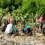 HARI BUMI : Sentuh Bumi dengan Hati, 400 Pemuda Tanam Mangrove di Semarang