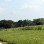 PERTANIAN SRAGEN : Moeldoko-Yuni Bangun Pabrik Beras Organik Berskala Ekspor