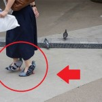 Koyoto Ohata mengenakan sepatu merpati saat berjalan di taman penuh merpati. (mymordernmet)
