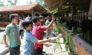Para siswa Olifant School mengunjungi sentra peternakan kambing etawa di Agrowisata Bhumi Merapi di Pakem, Sleman, belum lama ini. (dok. Olifant School)