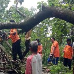 Puting Beliung Sragen, 40 Pohon Tumbang, Puluhan Rumah Rusak