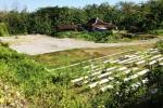 Penyebab Pembangunan Taman Tancep Mandek Bukan Karena Izin, Lalu?