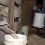 PERTANIAN SRAGEN : Sebagian Petani Sukorejo Masih Trauma Dengan Investor Padi Organik