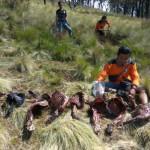 Kasus Pembantaian Rusa Lawu Karanganyar Ditangani Polisi Jawa Timur