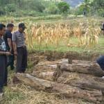 PENCURIAN PONOROGO : Curi 48 Batang Kayu di Hutan, 5 Pria Ditangkap Polisi