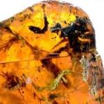 Peneliti Temukan Fosil Bayi Burung Berusia 99 Tahun