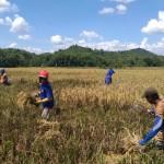 Pemerintah Terus Genjot Produksi Padi, Jagung dan Kedelai