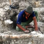 Warga menggali fosil di Desa Banjarejo, Gabus, Grobogan, Jateng, Selasa (13/6/2017). (JIBI/Solopos/Antara/Yusuf Nugroho)