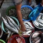 FOTO INFO BELANJA : Harga Ikan Laut di Pasar Bandarjo Naik
