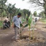 INFRASTRUKTUR SRAGEN : Warga Tanam Pohon Pisang di Jalan Tanon-Bendo