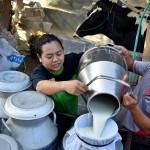 FOTO PETERNAKAN JATENG : Kelompok Tani Pakai Kandang Komunal